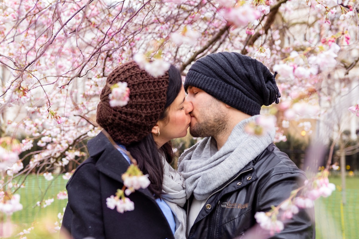 Couples Photoshoot - Couple kissing with pink cherry blossom surrounding them